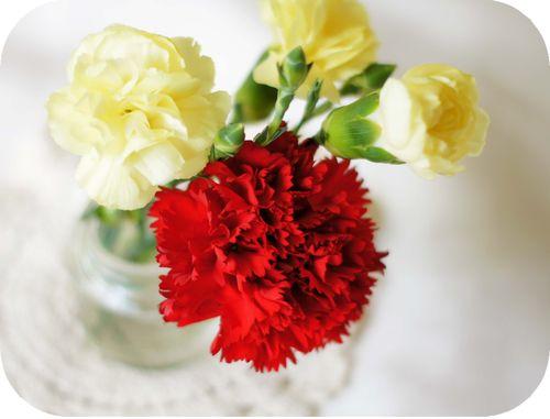 Carnations4