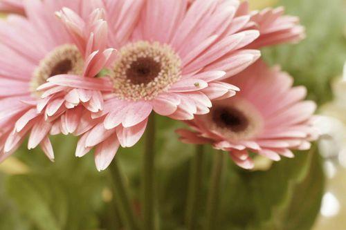 Weekendflowers2